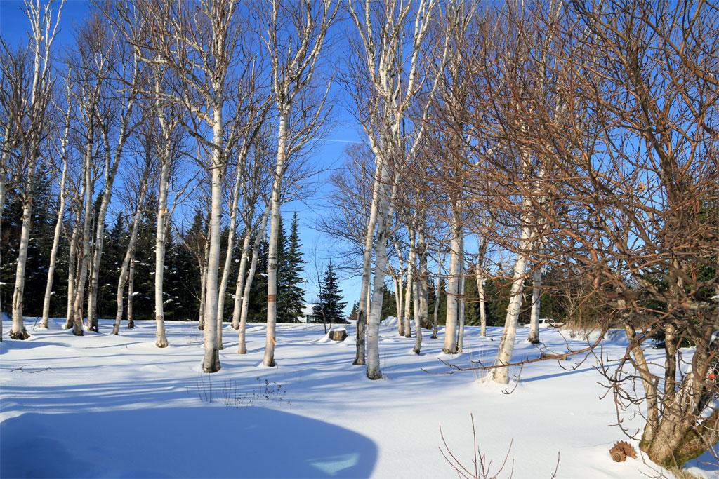 pg_winter1_full